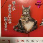 ✩1月15日の買取価格と、日本のネコ率✩