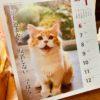 ✩2月23日の買取価格と、猫の日✩
